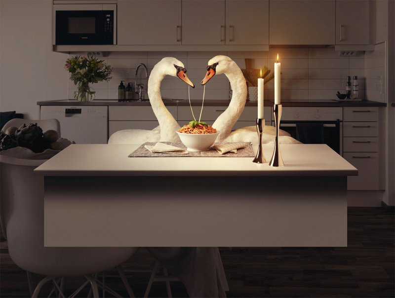Swans eating spaghetti